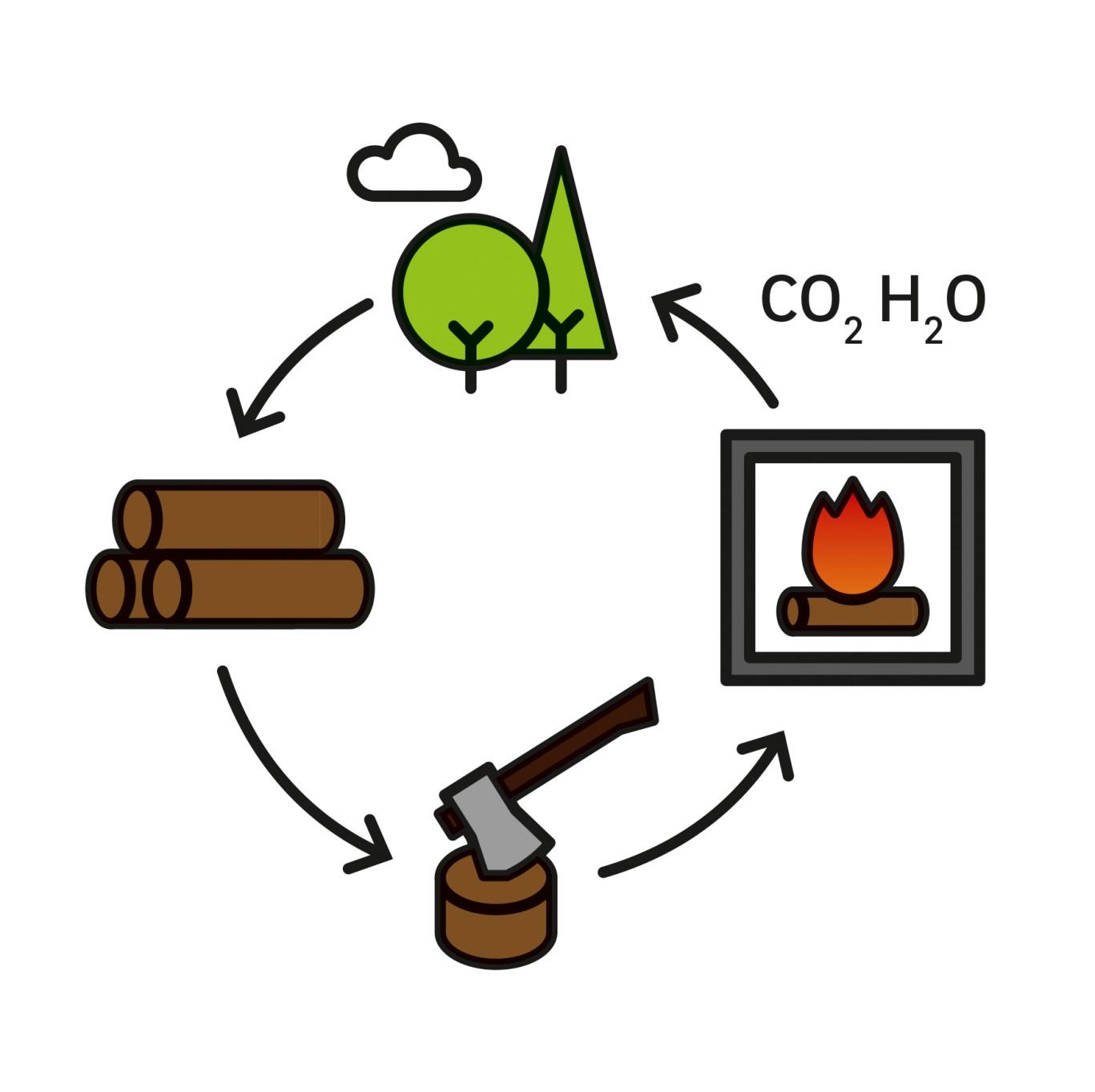 puunpolton hiilen kiertokulku